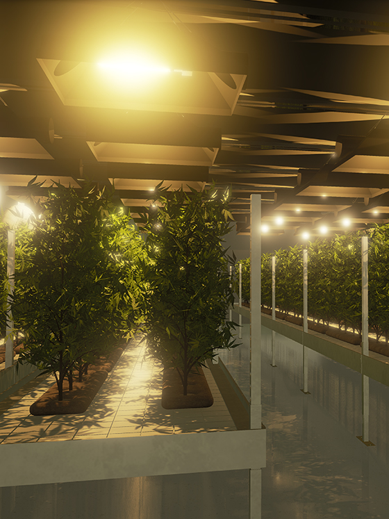 Rendering of cannabis plants inside a grow facility created by SMDVR